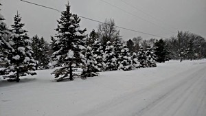 Snowmobile Trail Reports Snow Conditions And Weather